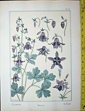 Columbine designs,Art Nouveau/Jugendstil,Eugene Grasset,La plante..1893 #10