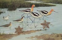 "Vtg 1967 Bird Art Print Color Litho Robert Verity Clem 10"" x 14"""