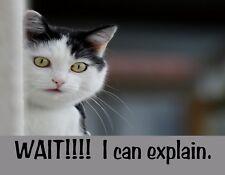 METAL FRIDGE MAGNET Black White Cat Wait I Can Explain Funny Humor