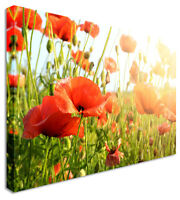 Poppy Picture Field Sunlight Canvas Wall Art Picture Print