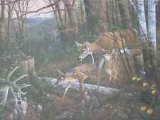 OAK RIDGE RENEWAL MICHAEL SIEVE WHITETAIL DEER PRINT