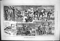 Old Sporting Dramatic News 1883 Night Shooting Dublin Ireland Curlew Victorian