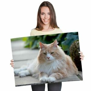 A1 - Norwegian Forest Cat Ginger White Poster 60X90cm180gsm Print #21945