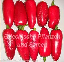 🔥 🌶 Jalapeno conchos Chili Chilli lngenioso procedentes de méxico 10 semillas frescas balcón