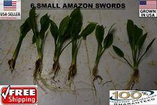 6  small amazon sword Plant  Easy Aquarium aquascaping planted tank easy