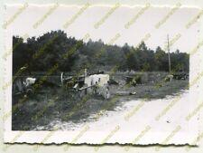 Foto, Wehrmacht, Beute, frz. Geschütze bei Gizy, Frankreich (W)20340