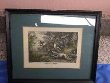Antique Hound Dog Deer Buck Hunting Hunt Original Etching Print Howitt 1800s