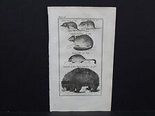 Buffon's Natural History, 1792, Animals, #09 Water Shrew, Garden Squirrel, Bear