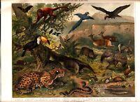 ca1890 Macaw Parrot Jaguar Wild Boar Monkey Ostrich Snake Antique Print