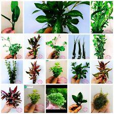 lotto piante per acquario 10 specie diverse   ,muschio fertilizzante,alghe