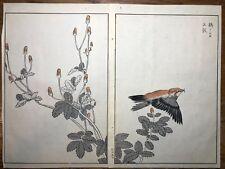 Japanese Woodblock Print Maekawa Bunrei Birds of Japan Red Crossbill #27