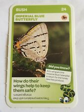 Taronga Zoo Woolworths Aussie Animal Card #24 Imperial Blue Butterfly