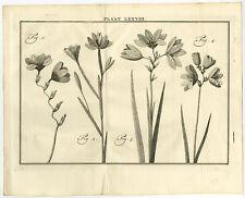 Antique Print-LXXVIII-IXIA-BABIANA-GEISSORHIZA-Houttuyn-Linnaeus-Philips-1767