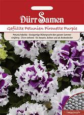 Dürr Petunien Pirouette Purple  0809  Petunie Balkonkasten Ampel Schale Kübel
