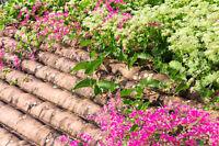 Saatgut exotische Pflanzen Samen Garten Sämereien Balkon Terrasse KORALLENWEIN