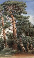 TREES IN LANDSCAPE Antique Watercolour Painting - 19TH CENTURY