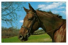 """KUBLA"" THOROUGHBRED MARE,HUNTER AT ROSE VIEW FARM,POUGHKEEPSIE N.Y. POSTCARD"