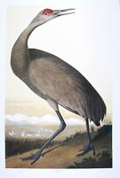 Audubon  - Ltd. Ed. Loates  Sand Hill Crane Print Signed