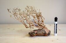 Medium Bonsai Driftwood Tree on Rocks Aquarium Aquascape Plant Fish Shrimp Tank