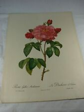 REDOUTE Botanical FUCHSIA Flower VINTAGE Print #43