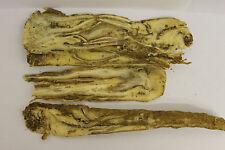 SINENSIS angelicae RADIX / Angelica cinese radice (DANG GUI) Dry 200g @UK venditore @
