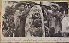1962 Banana workers in Guatemala encasing fruit in plastic covering art print