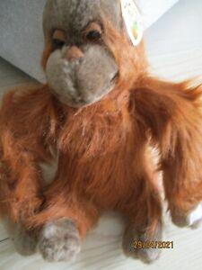 Cuddly Orangutan