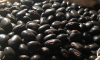 Black Kaunch Seeds Mucuna Pruriens Indian Velvet Bean Konch Beej 50g to 1000g FS