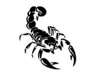 Skorpion Aufkleber Autoaufkleber Sternzeichen Tribal Tuning decal 24 #8167