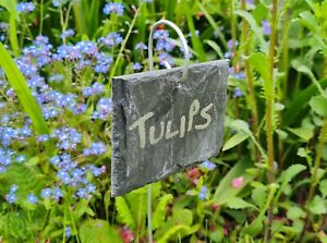 20 Natural Slate Hanging Garden Plant Markers Labels Gardening Gifts 10cm x 6cm