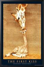 GIRAFFES MOTHERS KISS POSTER FRAMED in Premium Black Wood Frame, Size 24x36