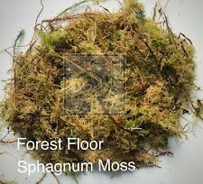 Forest Floor Sphagnum Moss, 100% Natural and Freshly Hand Picked