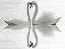 SWANS LOVE BLACK WHITE ROMANCE SWAN PHOTO ART PRINT POSTER PICTURE BMP912A
