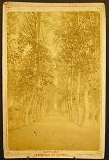 Photo c1900 Perpignan La Promenade des platanes Photographie ancienne 16 cm
