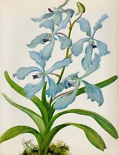Botanical ORCHID Print Gallery Wall Art Shabby Chic Decor Vanda C. #1931