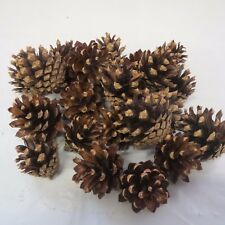 "Lot of 20 Red Pine pine cones for crafts 1"" to 2""  CLEAN craft supplies"