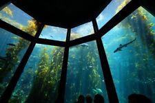 Monterey Bay Aquarium Fundraiser - Fine Art Photography Metal Prints