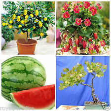 Bonsai Fruit Seeds Combo #4 - Gooseberry Lemon Strawberry Watermelon Seeds Pack