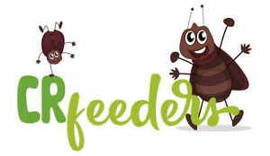 Dubia Roaches ALL SIZES Small, small/ medium, Medium, Large, sub adult