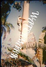 Vintage Original KODACHROME Red Border Slide Havana Cuba Man Climbing Tree 1950s