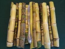 12+ Sugar Cane Cuttings, Sugar Cane, Yellow/Green Sugar Cane