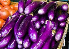 ☺20 graines d aubergine longue asiatique