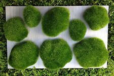 Miniature Fairy Garden Terrarium ~ Set of 8 Decorative Display Moss Rocks ~ New