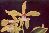 (fv0) Postcard: Orchids