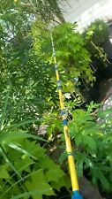 """Sabre Classic Stroker 6' 6"""" 20-50 Conventional Saltwater Fishing Rod Free Ship"""