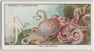 Octopus and Cuttlefish Adapt Color Change Ocean Sea  85+ Y/O Trade Card