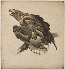 """KM"", Wachsamer Adler, Audubons Birds of America, um 1830, Aquatinta"