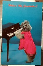 1950's POODLE DOG Dressed for Concert Playing Piano Anthropomorphism Postcard