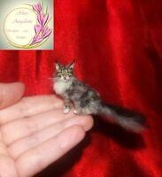 OOAK 1:12 Handsculpted Maine Coon cat Dollhouse realistic OOAK miniature handmad