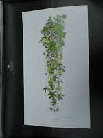 DOROTHEA HYDEL ARGE LIMITED EDITION PRINT PASSION FLOWER VGC LOW POST